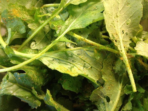 Curried Raw Greens